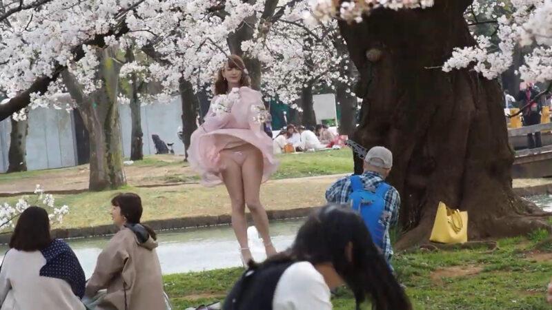 東京お花見散歩 強風の代々木公園で桜を愛でる 明日から外出自粛 桜も見納めか 2020/3/27 19 00:22
